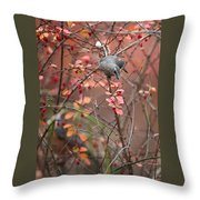 Cedar Waxwing Foraging Throw Pillow