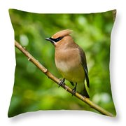 Cedar Waxwing Gathering Nesting Material Throw Pillow