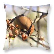 Cedar Waxwing - Img_0010-7x5 Throw Pillow