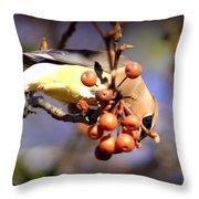 Cedar Waxwing - Img_9760-004 Throw Pillow