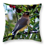 Cedar Waxwing In Tree 030515a Throw Pillow