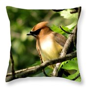 Cedar Waxwing Throw Pillow