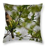 Cedar Waxwing Pictures 15 Throw Pillow