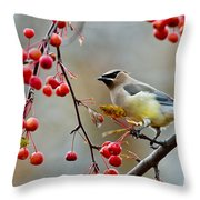 Cedar Waxwing Pictures 50 Throw Pillow