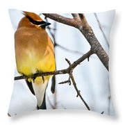 Cedar Waxwing Pictures 53 Throw Pillow