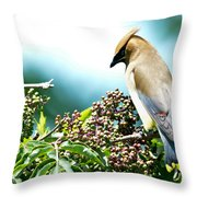 Cedar Waxwing Pose Throw Pillow