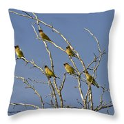 Cedar Waxwings Throw Pillow
