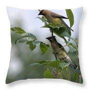 Cedar Waxwings Throw Pillow