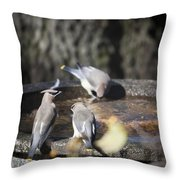 Cedar Waxwings Squared 2 Throw Pillow