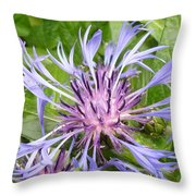Centaurea Montana Blue Flower Throw Pillow