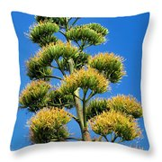 Century Plant 9 Throw Pillow