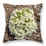 Cerastium Uniflorum Throw Pillow