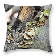 Violet-toothed Polypore Throw Pillow