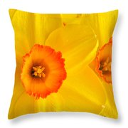 Ceylon Daffodils Throw Pillow