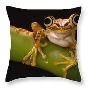 Chachi Tree Frog Ecuador Throw Pillow