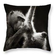 Chacma Baboons Grooming Throw Pillow