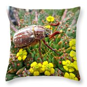 Chafer Beetle On Medusa Succulent Throw Pillow