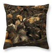 Chagras Round-up Cattle Ecuador Throw Pillow