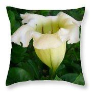 Chalice Vine Flower 9 Throw Pillow