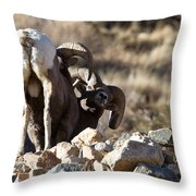 Challenging Authority Throw Pillow