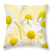 Chamomile Flowers Close Up Throw Pillow