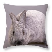 Champagne D'argent Throw Pillow