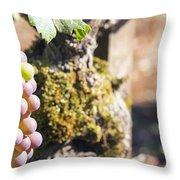 Champagne Grapes Closeup Throw Pillow