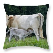 Charolais Cattle Nursing Young Throw Pillow