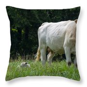 Charolais Cow And Calf In Field Throw Pillow