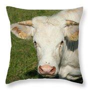 Charolais Cow Throw Pillow