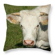Charolais Cow Throw Pillow