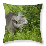Chartreux Cat And Grass Throw Pillow