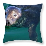 Chatham Harbor Seal Throw Pillow