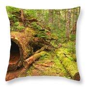 Cheakamus Old Growth Cedar Stumps Throw Pillow