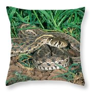 Checkered Garter Snake Throw Pillow