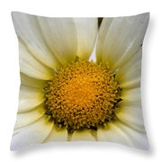 Cheery Daisy  Throw Pillow