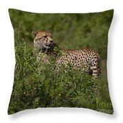 Cheetah   #0089 Throw Pillow