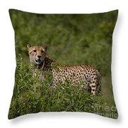 Cheetah   #0090 Throw Pillow