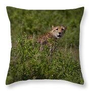 Cheetah   #0093 Throw Pillow