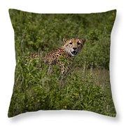 Cheetah   #0095 Throw Pillow