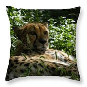 Cheetah 2 Throw Pillow