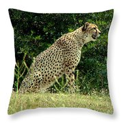 Cheetah-79 Throw Pillow
