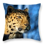 Cheetah Acinonyx Jubatus Throw Pillow