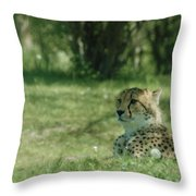 Cheetah At Attention Throw Pillow