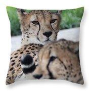 Cheetah Awakening Throw Pillow