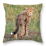 Cheetah Cub Looking Your Way Throw Pillow