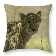 Cheetah Gaze Throw Pillow