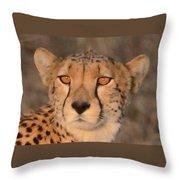 Cheetah Gaze At Sunset Throw Pillow