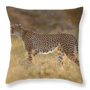 Cheetah In Grassland Kenya Throw Pillow
