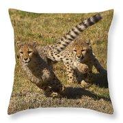 Cheetah Juveniles Playing Throw Pillow